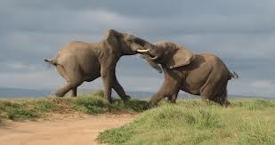 193_elephants